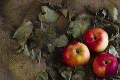 Äpfel auf Sackleinen Stockbilder