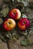 Äpfel auf Sackleinen Lizenzfreie Stockfotos