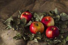 Äpfel auf Sackleinen Stockfotos