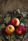 Äpfel auf Sackleinen Lizenzfreies Stockfoto