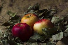 Äpfel auf Sackleinen Lizenzfreie Stockbilder
