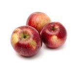 Äpfel auf weißem Hintergrund Lizenzfreies Stockbild