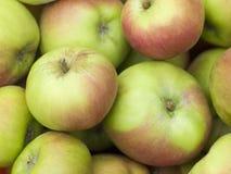 Äpfel, Cox Lizenzfreies Stockbild
