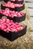 Äpfel in den Pappschachteln an einer landwirtschaftlichen Ausstellung oder angemessenes stockfotografie