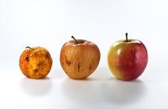Äpfel in den verschiedenen Stufen des Alterns Lizenzfreie Stockbilder