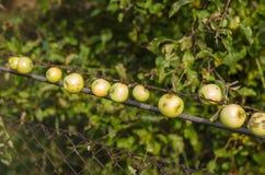 Äpfel in der Reihe Lizenzfreie Stockbilder