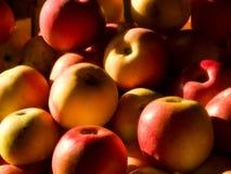 Äpfel in der Sonne Stockbild