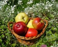 Äpfel in einem Korb Stockfotografie