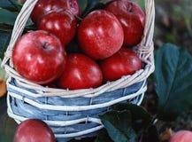 Äpfel in einem Korb Apple ernten Apple-Hintergrund Lizenzfreie Stockbilder