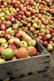 Äpfel für Apfelsaft Stockbild