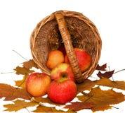 Äpfel fielen vom Korb Stockfotografie