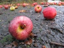 Äpfel gefallen auf nasse Straße Stockfotografie