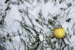 Äpfel gelegt aus den Grund unter Schnee Lizenzfreies Stockbild