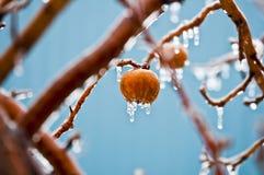 Äpfel im Eisregen   stockbild