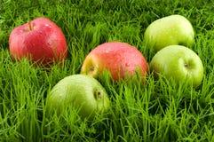 Äpfel im Gras. Stockfotos