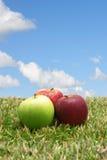 Äpfel im Gras Lizenzfreie Stockfotos