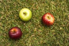 Äpfel im Gras Lizenzfreies Stockfoto