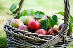 Äpfel im Korb Lizenzfreies Stockbild