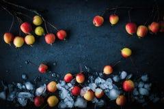 Äpfel im Schnee auf dem dunklen Hintergrund Stockfotografie