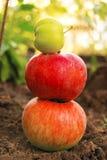 Äpfel ist in einem Garten Stockfotos