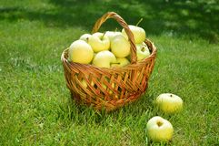 Äpfel, Korb, Sommer, Gras, Vitamine, Früchte lizenzfreie stockfotografie