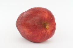 Äpfel lokalisiert. Lizenzfreies Stockfoto