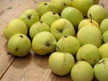 Äpfel - Malus domestica weißes transparentes Lizenzfreie Stockbilder
