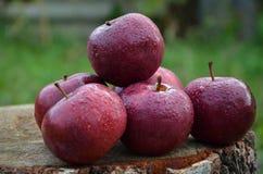 Äpfel mit etwas Tropfen des Taus Lizenzfreies Stockbild