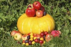 Äpfel, Pflaumen und alycha auf Kürbis Lizenzfreie Stockbilder