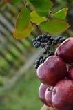 Äpfel u. ashberry lizenzfreie stockbilder