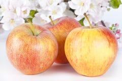 Äpfel und Apple-Blüten Stockfoto