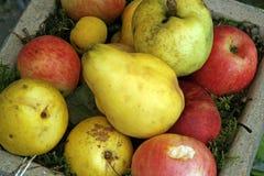 Äpfel und Birne Lizenzfreies Stockfoto