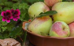 Äpfel und Blätter Stockbild