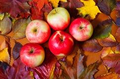 Äpfel und Herbstlaub auf hölzernem Hintergrund Stockfotos
