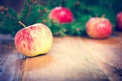 Äpfel und Tannenzweig Stockbilder