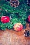 Äpfel und Tannenzweig Stockfoto