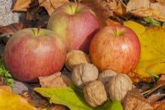 Äpfel und Walnüsse - Herbst Stockbilder