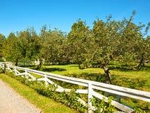 äppleäpplefilialen bär fruktt leavesfruktträdgården Royaltyfria Bilder