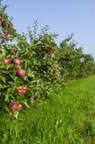 äppleäppletrees Arkivfoto