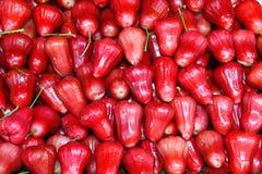 äpple alldeles rose thailand arkivfoton