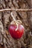 Äpple för fågelmat Arkivfoto