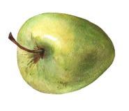 äpple - green Hand dragen vattenfärgmålning Royaltyfri Fotografi