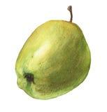 äpple - green Hand dragen vattenfärgmålning Arkivbilder