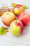 Äpple-höst skörd Royaltyfri Foto