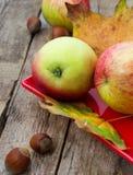 Äpple-höst skörd Royaltyfri Fotografi