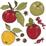 Äpple-, krydda- och bäruppsättning Royaltyfria Foton