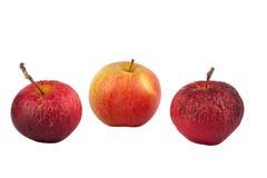äpple nya gammala en två Arkivbild
