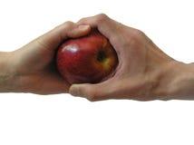 äpple pandora s royaltyfri fotografi