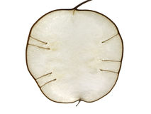 äpple som lunaria Royaltyfri Bild