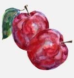 äpple två Royaltyfri Bild